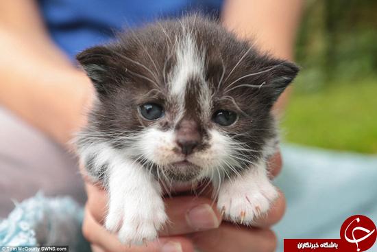 عجیب ترین گربه جهان به دنبال خانه است +تصاویر