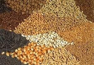 واحدهای غیر مجاز خوراک دام آفت به جان تولیدکنندگان انداخت