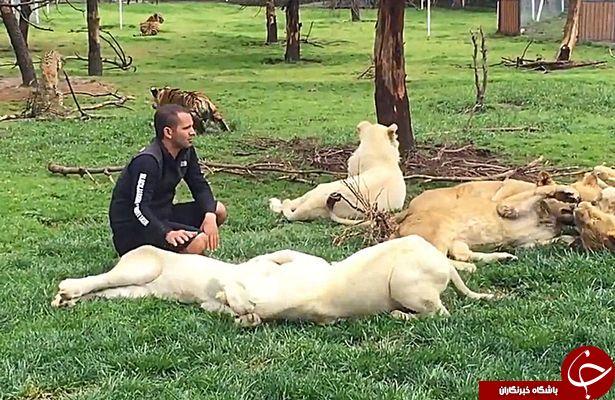 نجات قهرمانانه یک کارمند باغ وحش به وسیله یک ببر+تصاویر