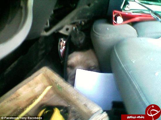سگی که از خودروی له شده سالم بیرون کشیده شد +تصاویر