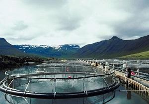 افزایش 30 درصدی تولید محصولات کشاورزی با استفاده ازپساب استخرهای پرورش ماهی