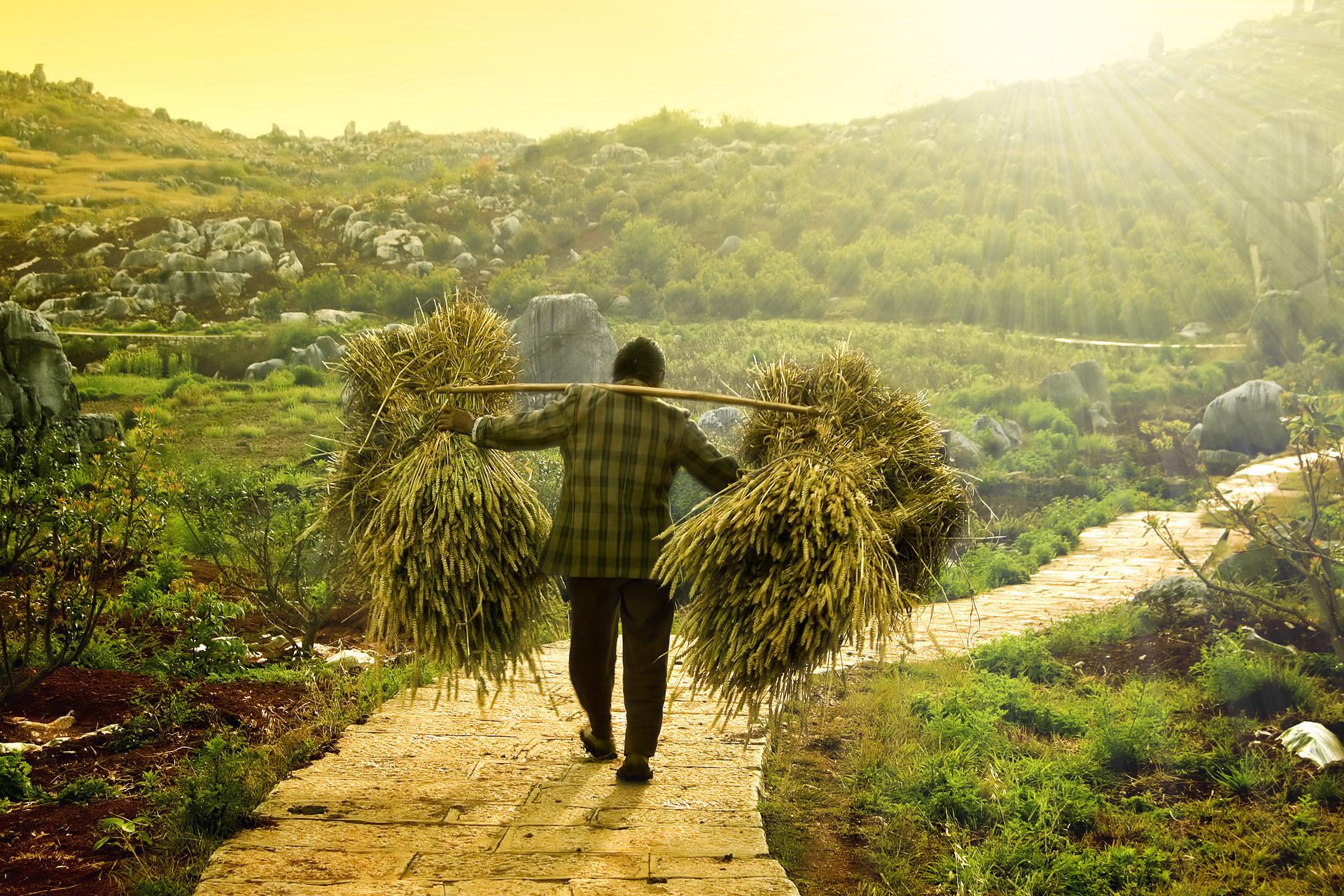 توسعه بخش کشاورزی مستلزم استقرارشرکت های فنی مهندسی