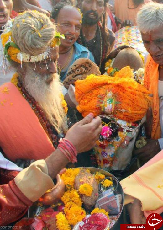 تصاویری از مراسم ازدواج گاوها در هندوستان
