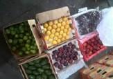 باشگاه خبرنگاران -فرهنگ سازی تنها راهکار مقابله با خرید میوه های خارجی