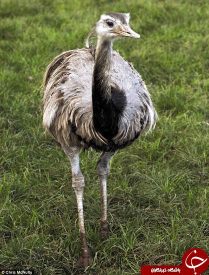 از این پرنده خبر دارید؟ +تصاویر