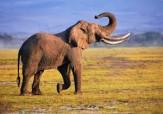 باشگاه خبرنگاران - فیل با پرتاب سنگ دختر 7 ساله را کشت