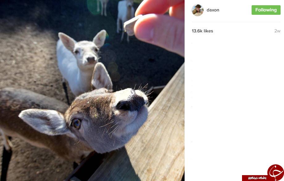 تصاویری از سلطان سلفی با حیوانات + 10 عکس