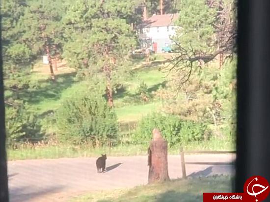 وقتی توله خرس از شاسی بلند خوشش نمیآید +تصاویر