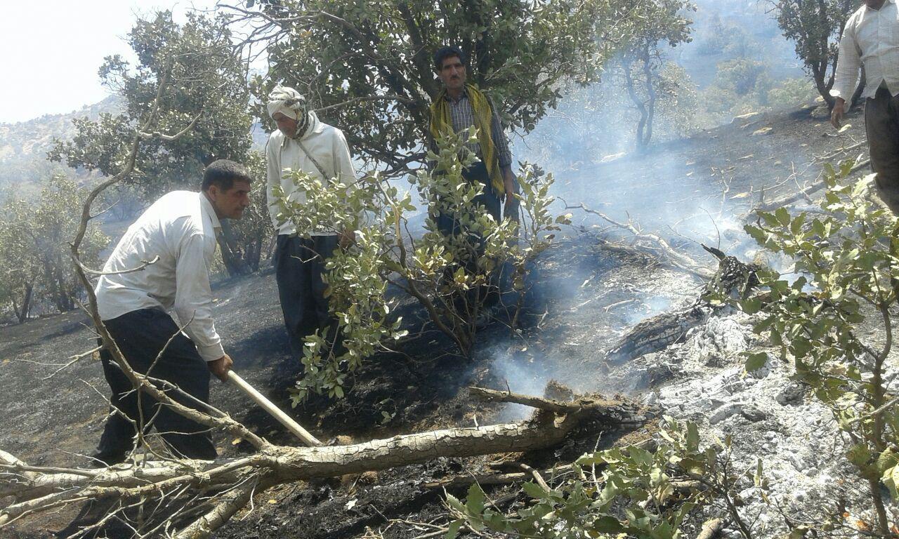 آتش سوزی گسترده در پارک جنگلی بلوران کوهدشت+تصاویر
