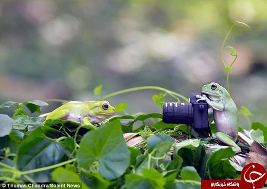 قورباغهها عکاس میشوند! +تصاویر
