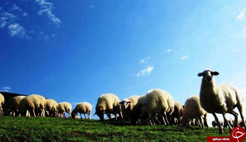 طبیعت زیبای ییلاق سوچاله در ماسال گیلان