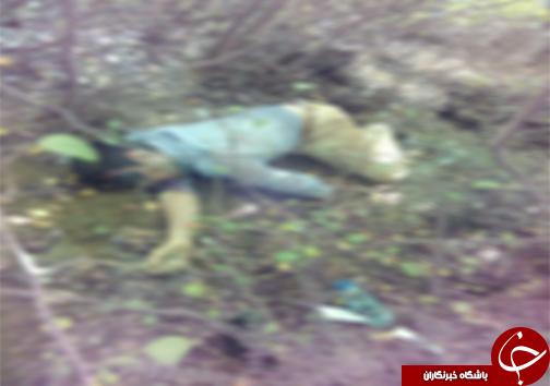 پیدا شدن جنازه در جنگل های پایین کولا + تصویر