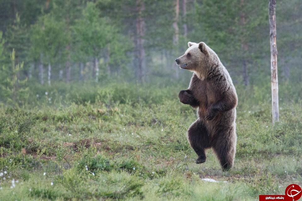 خنده دارترین عکس های حیات وحش سال 2016 انتخاب شدند+