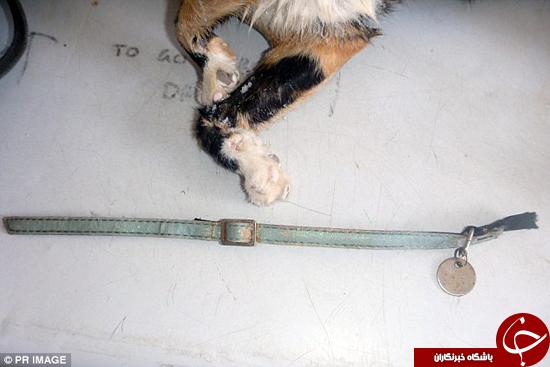 قاتل گربهها چگونه آنها را میکشد؟ +تصاویر