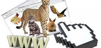 جریمه و حبس ، مجازات تبلیغ کنندگان بدون مجوز فضای مجازی در جهت خرید و فروش گونههای حیات وحش