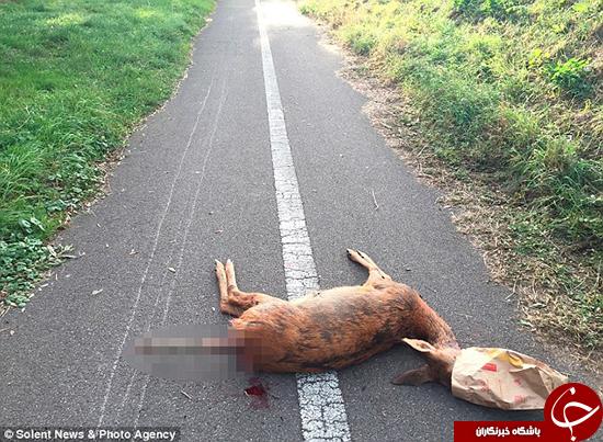 کشتن سریالی حیوانات +تصاویر