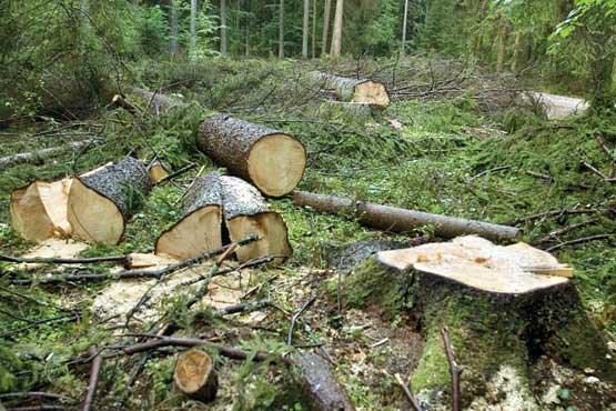 جنگلهایی که تبدیل به کالا شدند/ توقف طرح بهره برداری از جنگل مستلزم چیست؟