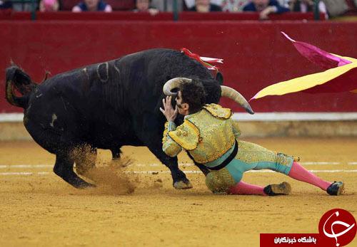 از ثبت رکورد پاراگلایدرسواران تا بلایی که یک گاو بر سر ماتادورش آورد