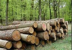 کشف 335 اصله چوب آلات قاچاق جنگلی در اردبیل
