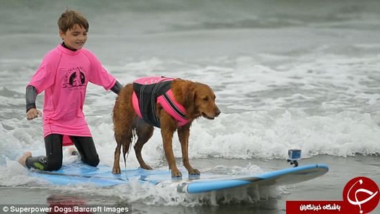 این سگ شکاری یک موجسوار حرفهای است +تصاویر