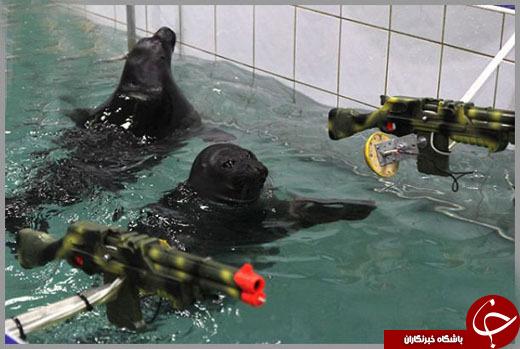 حیوانات در پستهای نظامی / ارتشی از حیوانات درجهدار +تصاویر