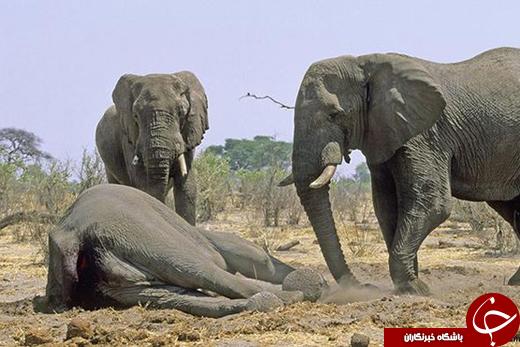 سوگواری حیوانات به روایت تصویر