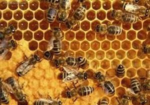 چطور در خانه عسل طبیعی را تشخیص دهید؟