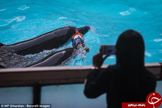 دلفینها به صورت غیر قانونی در سیرکها نگهداری میشوند +تصاویر