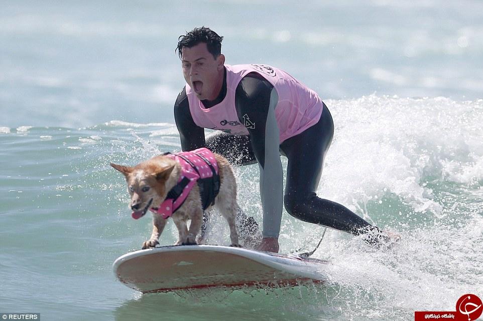 سگ های موج سوار