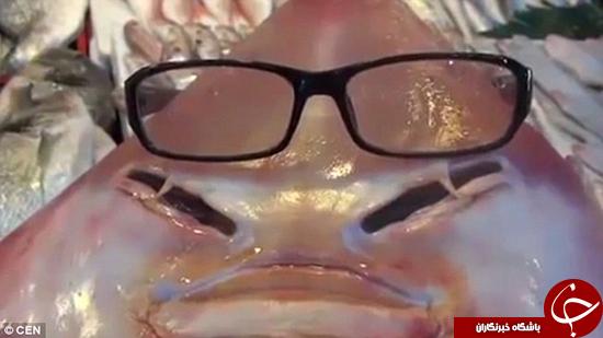کوسه انساننما که عینک میزند +تصاویر