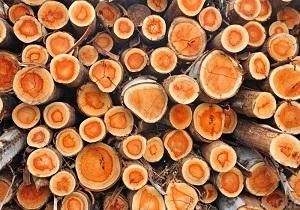 کشف و ضبط محموله قاچاق چوبآلات جنگلی در اردبیل