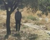 باشگاه خبرنگاران - خودکشی در باغات قزوین + تصویر