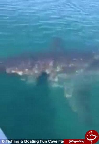 لحظه وحشتناکی که ماهیگیران کنار هیولای دریا بودند +تصاویر