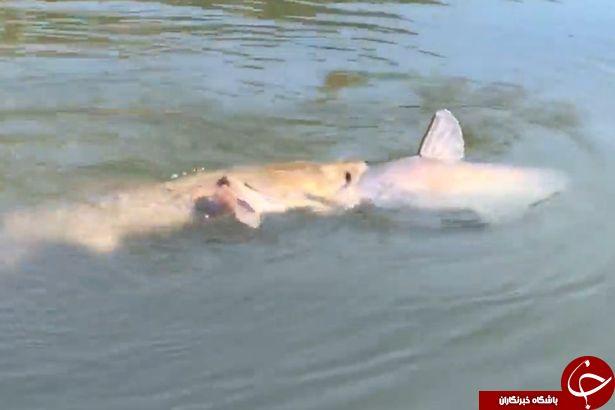 ثبت عجیبترین شکار توسط دوربین یک ماهیگیر +فیلم