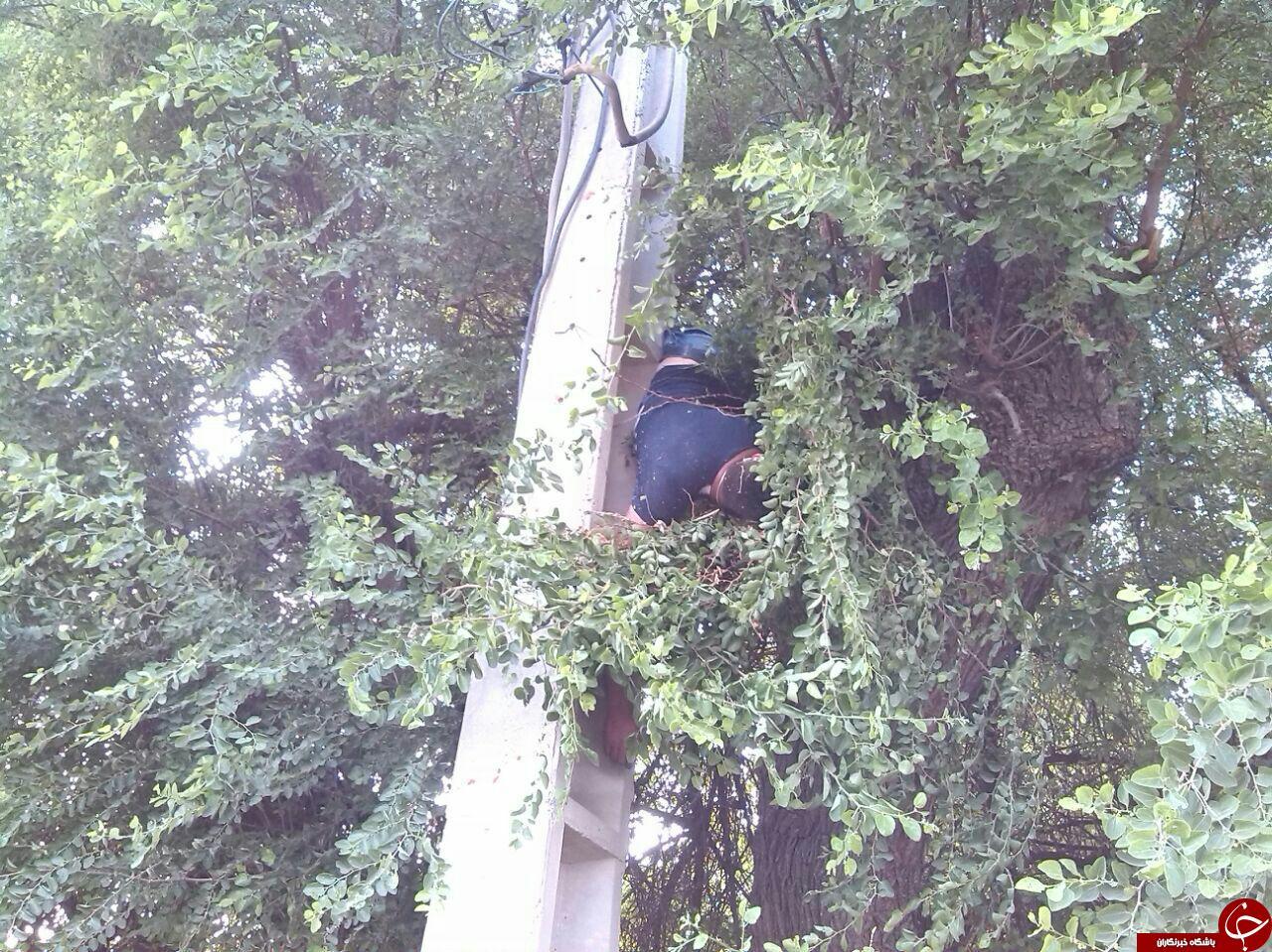 برق گرفتگی هولناک بر روی درخت! + تصاویر