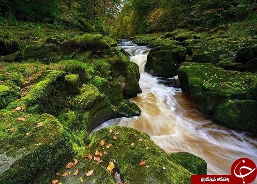 در این رودخانه ظرف چند ثانیه بلعیده خواهید شد !+عکس