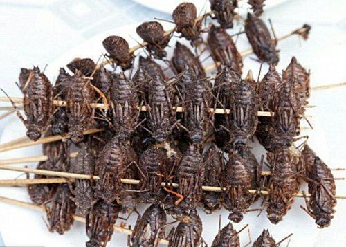 خوراکهای تهیه شده از حشرات به تفکیک ارزش غذایی + تصاویر