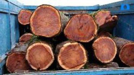 توقیف دو دستگاه حامل چوب قاچاق
