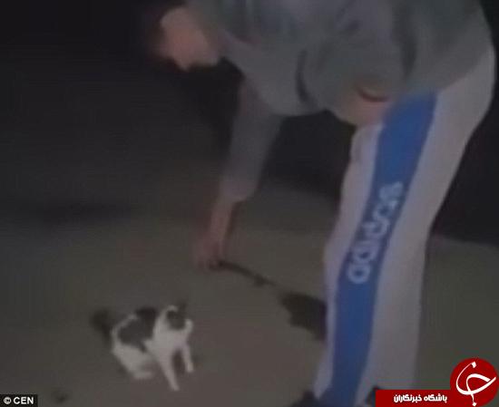 اشتباه گرفتن گربه با توپ +تصاویر
