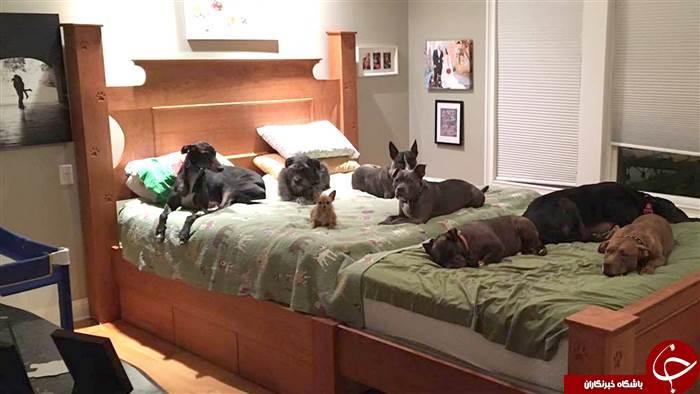 زوج نیویورکی که با 8 سگ زندگی می کنند +تصاویر