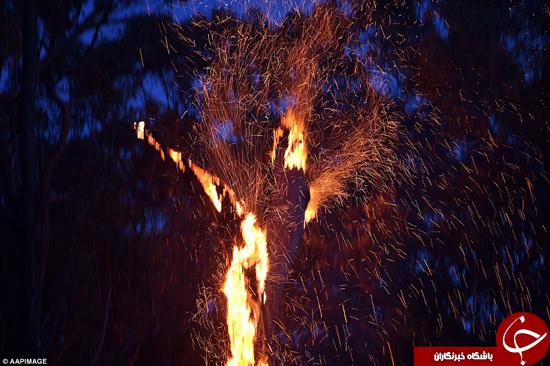 تک درخت آتش گرفته در کنار اتوبان +تصاویر