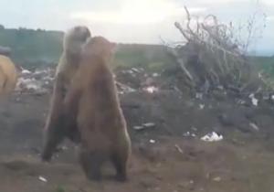 تبدیل محل دفن زباله به پاتوقی برای خرسها + فیلم