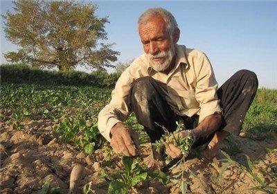 دولت به کشاورزان جریمه دیرکرد می دهد؟