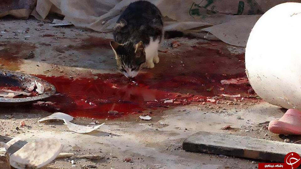 دختر قاتل حیوانات برای قتل مادرش نیز نقشه داشت+تصاویر(16+)