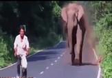 باشگاه خبرنگاران - حمایت فیل مادر از خانواده + فیلم