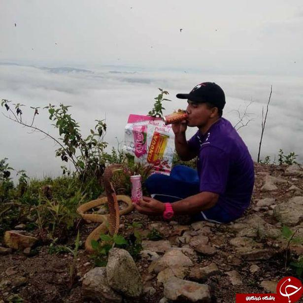 دلیل عجیب و تکان دهنده مرد تایلندی برای ازدواج با مار کبری +تصاویر