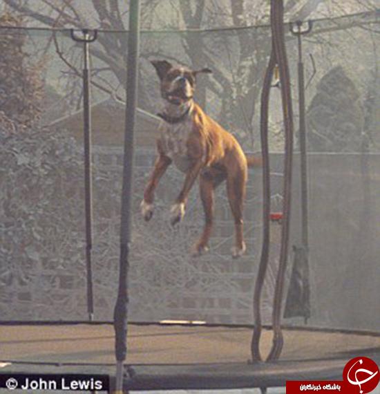 استفاده از سگها برای تبلیغات ممنوع! +تصاویر