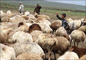 استفاده از نژاد رومانف در اصلاح نژاد گوسفندان مشگین شهر