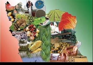 مسیر ناهموار پیش روی توسعه صادرات محصولات کشاورزی