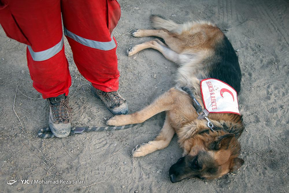 سگ هلال احمر